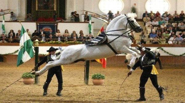 Así bailan los caballos andaluces 4