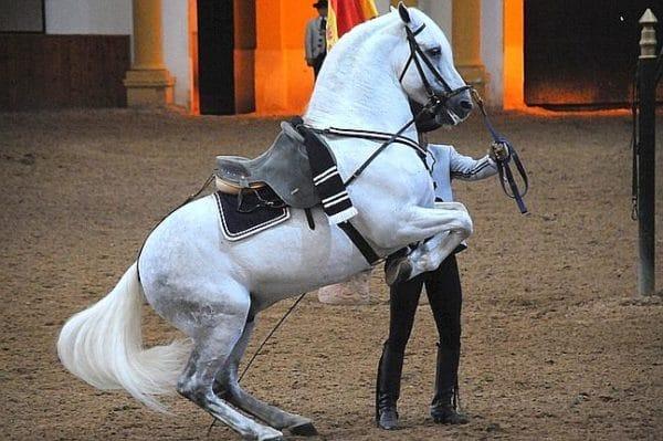 Así bailan los caballos andaluces 2
