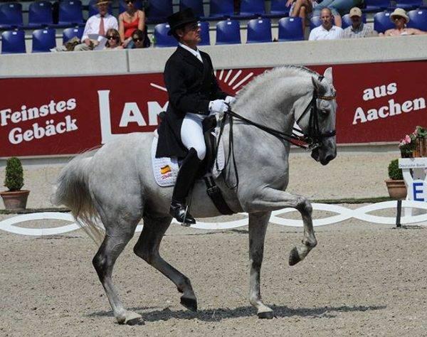 Así bailan los caballos andaluces 5