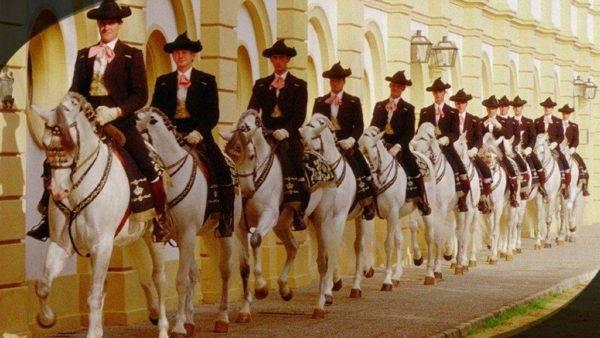 Así bailan los caballos andaluces 7