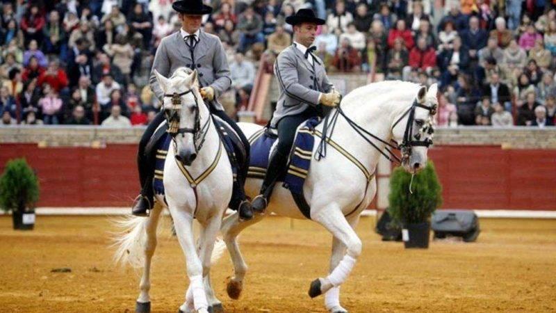 Así bailan los caballos andaluces 1