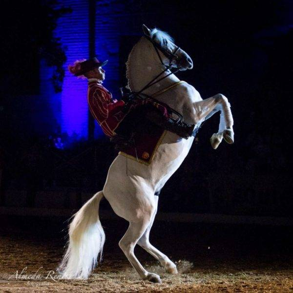 Así bailan los caballos andaluces 3