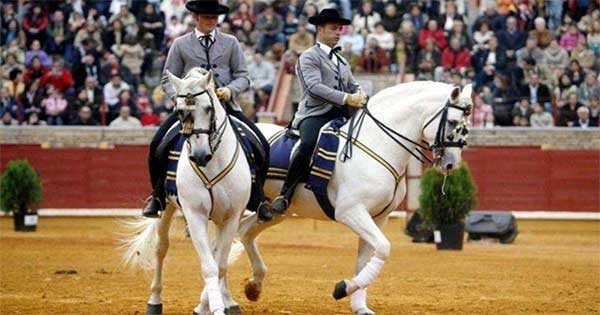 Así bailan los caballos andaluces